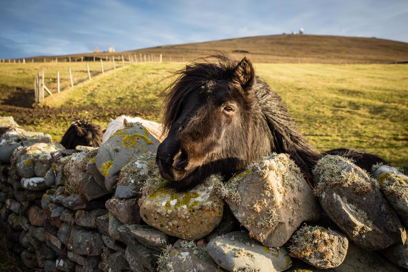 Sumburgh Shetland Ecosse