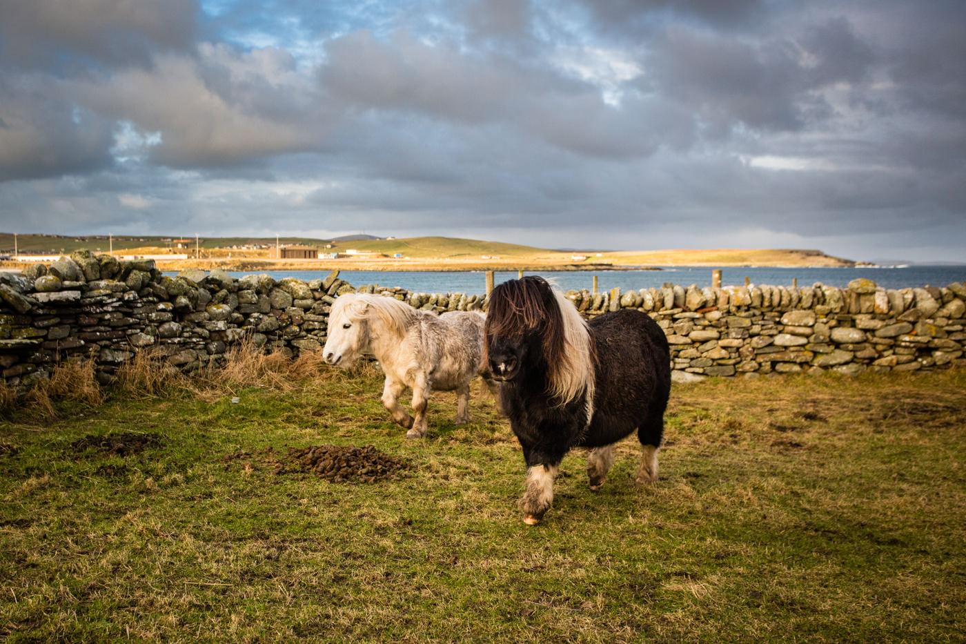 Sumburgh Shetland