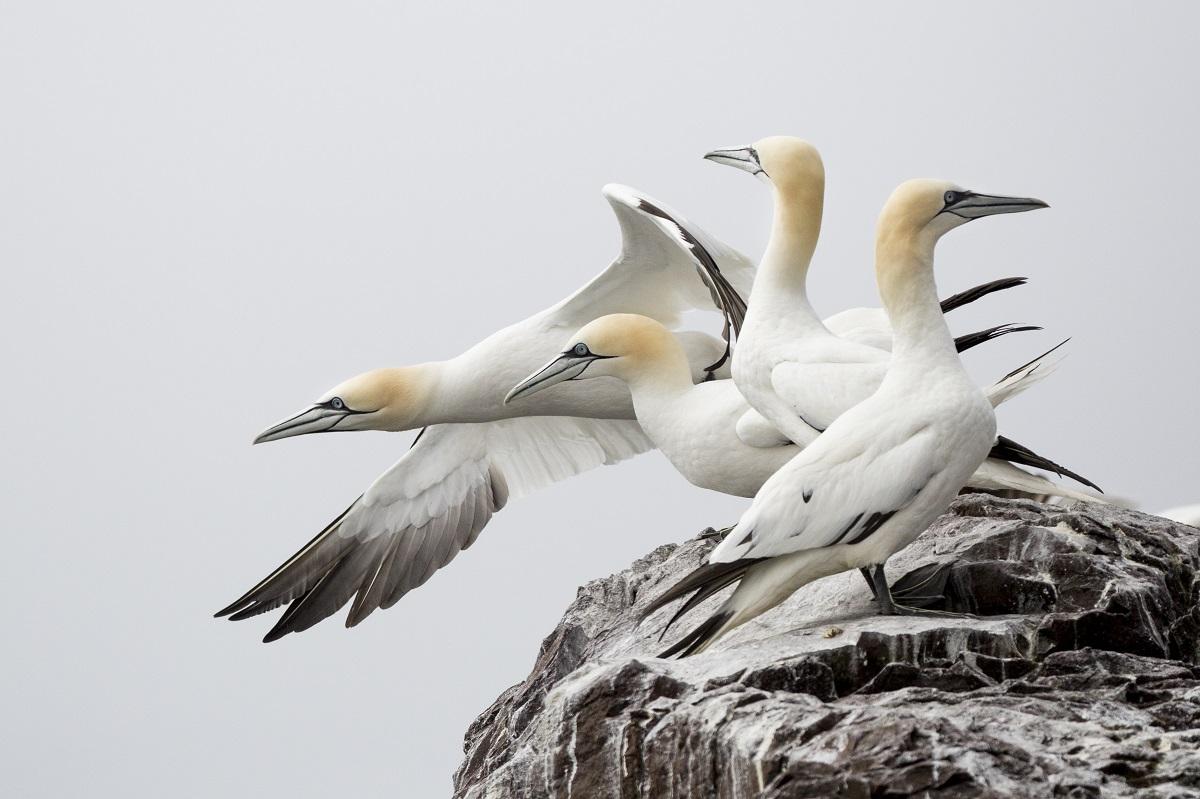 oiseaux ecosse